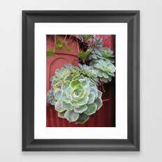 CANADA  - Succulents in Vancouver  Framed Art Print