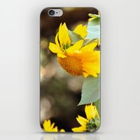 sunflowers iPhone & iPod Skins featuring SUNFLOWERS :) by Teresa Chipperfield Studios