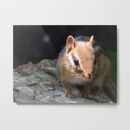Chippy sunshine Metal Print