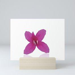 Lilium illustration Mini Art Print