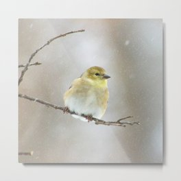 Winter American Goldfinch  Metal Print