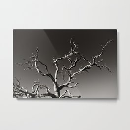 Joshua Tree 03 Metal Print