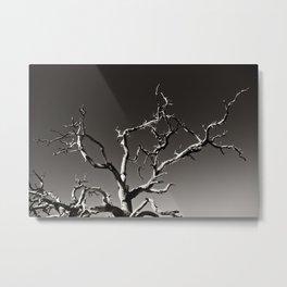 Joshua Tree 03 Metal Print