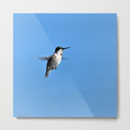 Juvenile Ruby-Throated Hummingbird Metal Print