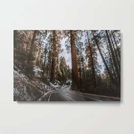 Giant Forest Exploring Metal Print