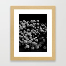 Summer snowballs Framed Art Print