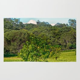 Beautiful citrus tree in rural area Rug