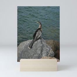 Anhinga DPG160111a Mini Art Print
