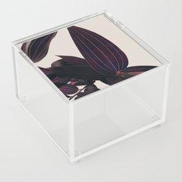 Lily Love Lila Acrylic Box