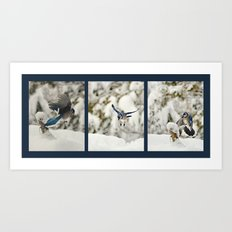 Blue Jay action Art Print