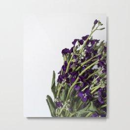 Purple Matthiola Close-up | Nature Photography - Plants & Flowers Metal Print