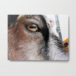 Goat Eye Metal Print