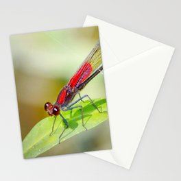 Red Damselfly Dragonfly Stationery Cards