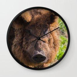 Mangalitsa pig Wall Clock