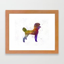 Poodle 01 in watercolor Framed Art Print
