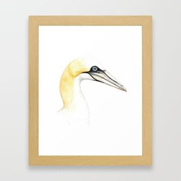 Northern gannet Framed Art Print