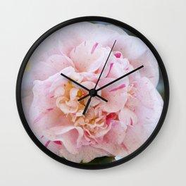 Strawberry Blonde Camellia Up Close Wall Clock