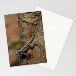 Agama Stationery Cards