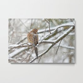 Winter Dove Metal Print