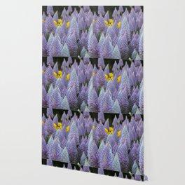 Fox tail Flowers Wallpaper