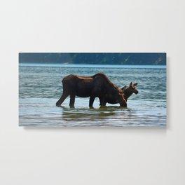 Mother moose and calf in Jasper National Park Metal Print