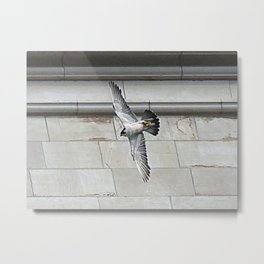 Pittsburgh Cathedral Peregrine falcon 11 Metal Print