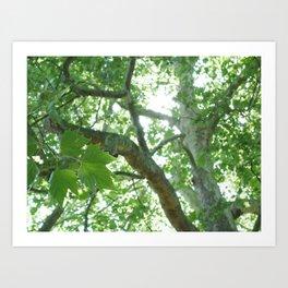 Large Old Tree Art Print
