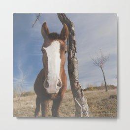 """Wild horse at the mountains"" Metal Print"