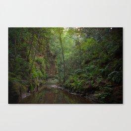 aptos creek canyon Canvas Print