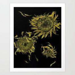 Dried Sunflowers Art Print