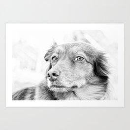 Dog portrait II - Fine Art photography Art Print