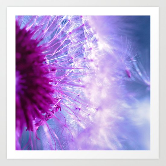 purple dandelion II Art Print