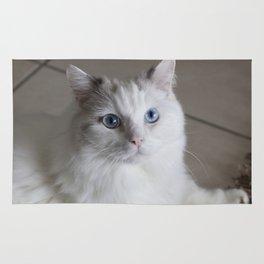 Ragdoll Cat Blue Eyes Rug