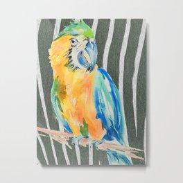 When a parrot met a zebra Metal Print