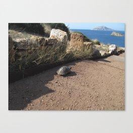 Grecian Turtle Canvas Print