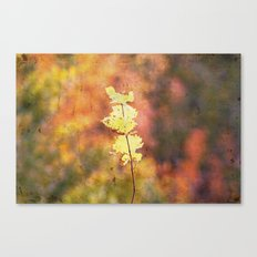 Seasonal Closeup - Autumn Canvas Print