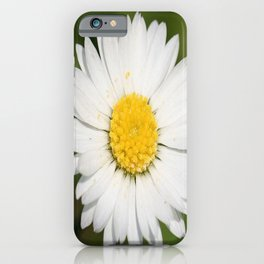 Closeup of a Beautiful Yellow and Wild White Daisy flower iPhone Case