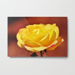Bright Yellow Rose With Pink Metal Print