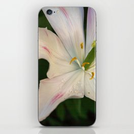 Jazz Berry Petals iPhone Skin
