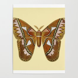 Butterfly Painting Poster
