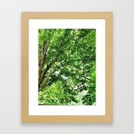 Pretty Trees in Arlington Framed Art Print