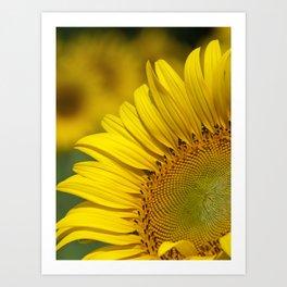 Sunflower smiling Art Print
