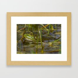 Frog in the Water Framed Art Print
