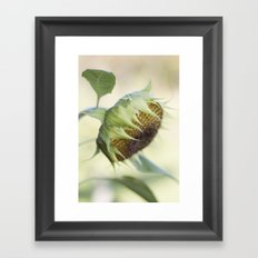 Seed Head Framed Art Print