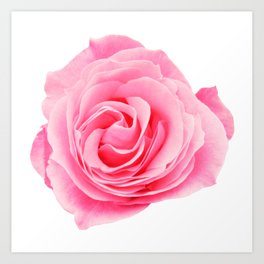 Swirly Petals Pink Rose Art Print
