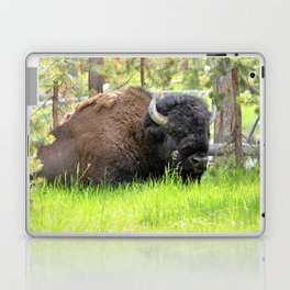 Buffalo Stare Down Laptop & iPad Skin