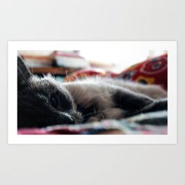 """The Cat 6 - """"Seriously?"""" Art Print"""