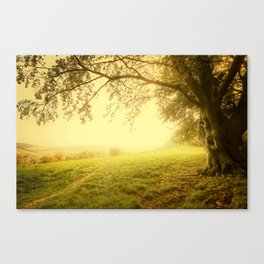 The Wizard Tree Canvas Print