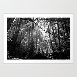 Sunrays Through the Trees Art Print