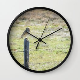 Burrowing owl Wall Clock